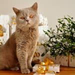 30 Thoughtful Cat Christmas Gift Ideas for Cat Lovers and Their Cats