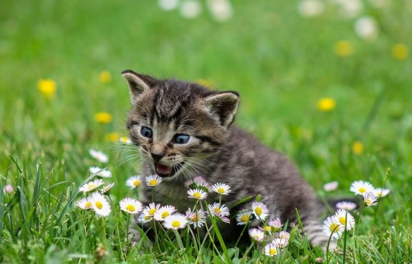 The Most Popular Themed Cat Names Of 2019