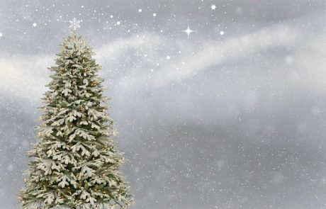 Fancy Outdoor Christmas Trees That You Can Purchase Online